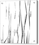 Aquatic Reeds Black And White Acrylic Print