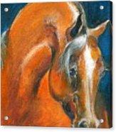 Arabian 1 Acrylic Print