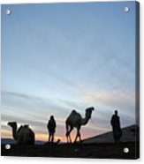 Arabian Camel At Sunset Acrylic Print