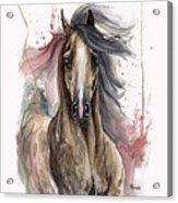 Arabian Horse 2013 10 15 Acrylic Print