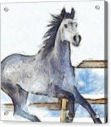 Arabian Horse And Snow - Da Acrylic Print