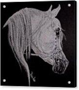 arabian horse XI Acrylic Print