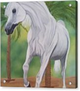 Arabian King Acrylic Print