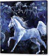 Arabian Night Acrylic Print