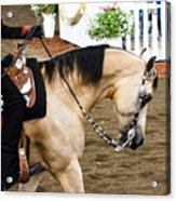Arabian Show Horse 5 Acrylic Print