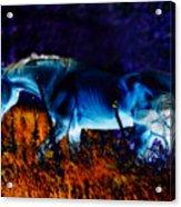Arabian Stallion Acrylic Print by ELA-EquusArt