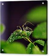 Arachnishower Acrylic Print