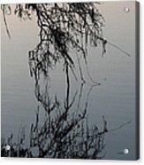 Arbor Reflections Acrylic Print