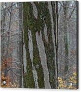 Arboreal Design Acrylic Print