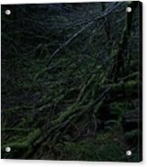 Arboreal Forest Acrylic Print by Jim Thomson