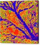 Arboreal Plateau 36 Acrylic Print
