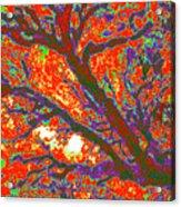 Arboreal Plateau 44 Acrylic Print