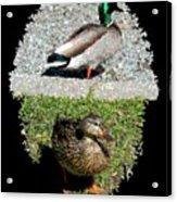 Arboretum Quackers Acrylic Print