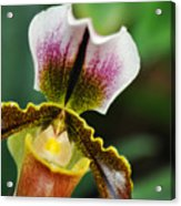 Arboretum Tropical House Orchid II Acrylic Print