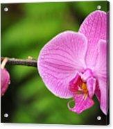 Arboretum Tropical House Orchid Acrylic Print