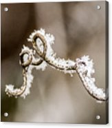 Arched Frosty Curlique Acrylic Print