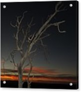 Arches Lone Tree At Dusk Acrylic Print