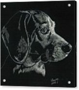 Archie Acrylic Print