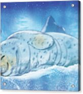 Arctic Seal Acrylic Print