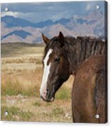 Are You Coming? Acrylic Print by Nicole Markmann Nelson