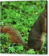 Are You Taking My Picture Again ? Acrylic Print