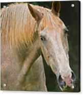 Are You Taking My Picture Acrylic Print