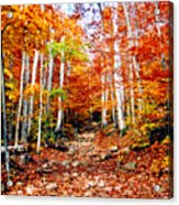 Arethusa Falls Trail Acrylic Print by Greg Fortier