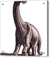 Argentosaurus Acrylic Print