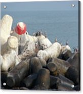 Arica Chile Sea Life Acrylic Print