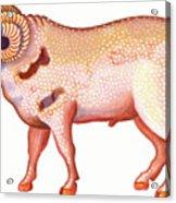 Aries The Ram Acrylic Print