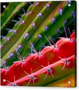Arizon Colors Acrylic Print