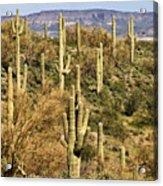 Arizona Desert Acrylic Print