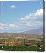 Arizona Farming Acrylic Print