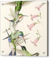 Arizona Hummingbirds Acrylic Print