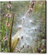 Arizona Milkweed Acrylic Print