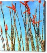 Arizona Nature Acrylic Print