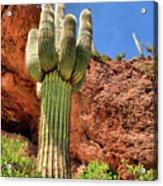 Arizona Saguaro #1 Acrylic Print