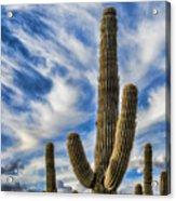 Arizona Saguaro  Acrylic Print