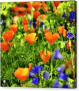 Arizona Wildflowers Acrylic Print