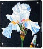 Arlene's Iris Acrylic Print