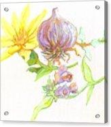 Arnica Garlic Thyme And Comfrey Acrylic Print