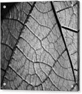 Aroid House Leaf Acrylic Print