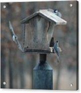 Around The Birdhouse Acrylic Print