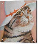 Arrogant Cat Acrylic Print