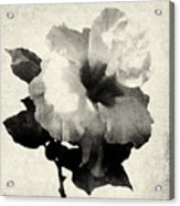 Art Is The Hibiscus -black And White Acrylic Print