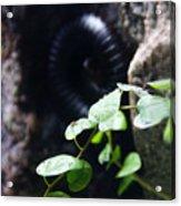 Arthropoda Acrylic Print