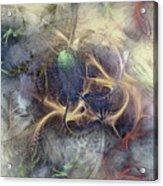 Arthropodium Acrylic Print