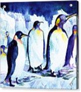 Arctic Penquins Acrylic Print