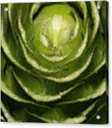 Artichoke Close-up Acrylic Print