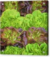 Artisinal Greens Madrid Spain Acrylic Print
